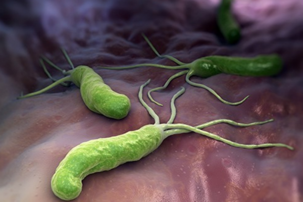 Helicobacter Pylori - Теледиетолог